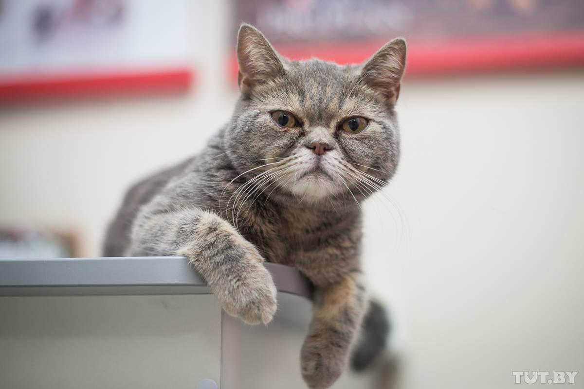 У вашей кошки может быть депрессия! как распознать и что делать?