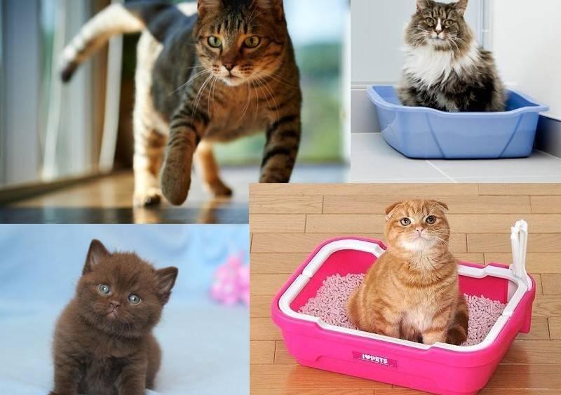 Как приучить кошку к домику: рекомендации и советы из практики