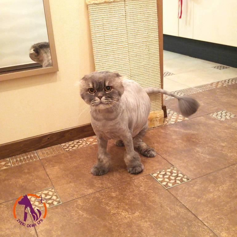 Стрижка котов: забота о здоровье и красоте животного - kot-pes
