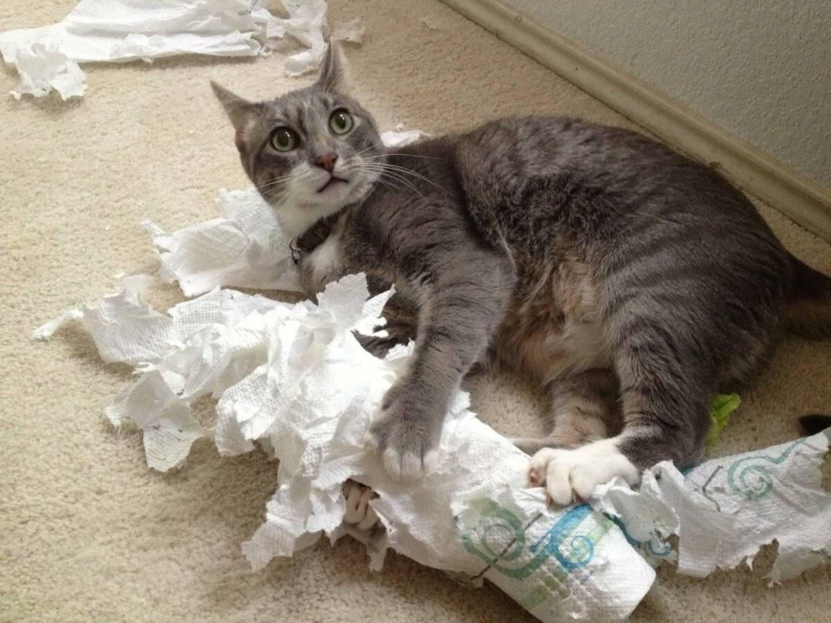 Нужно ли наказывать кошку
