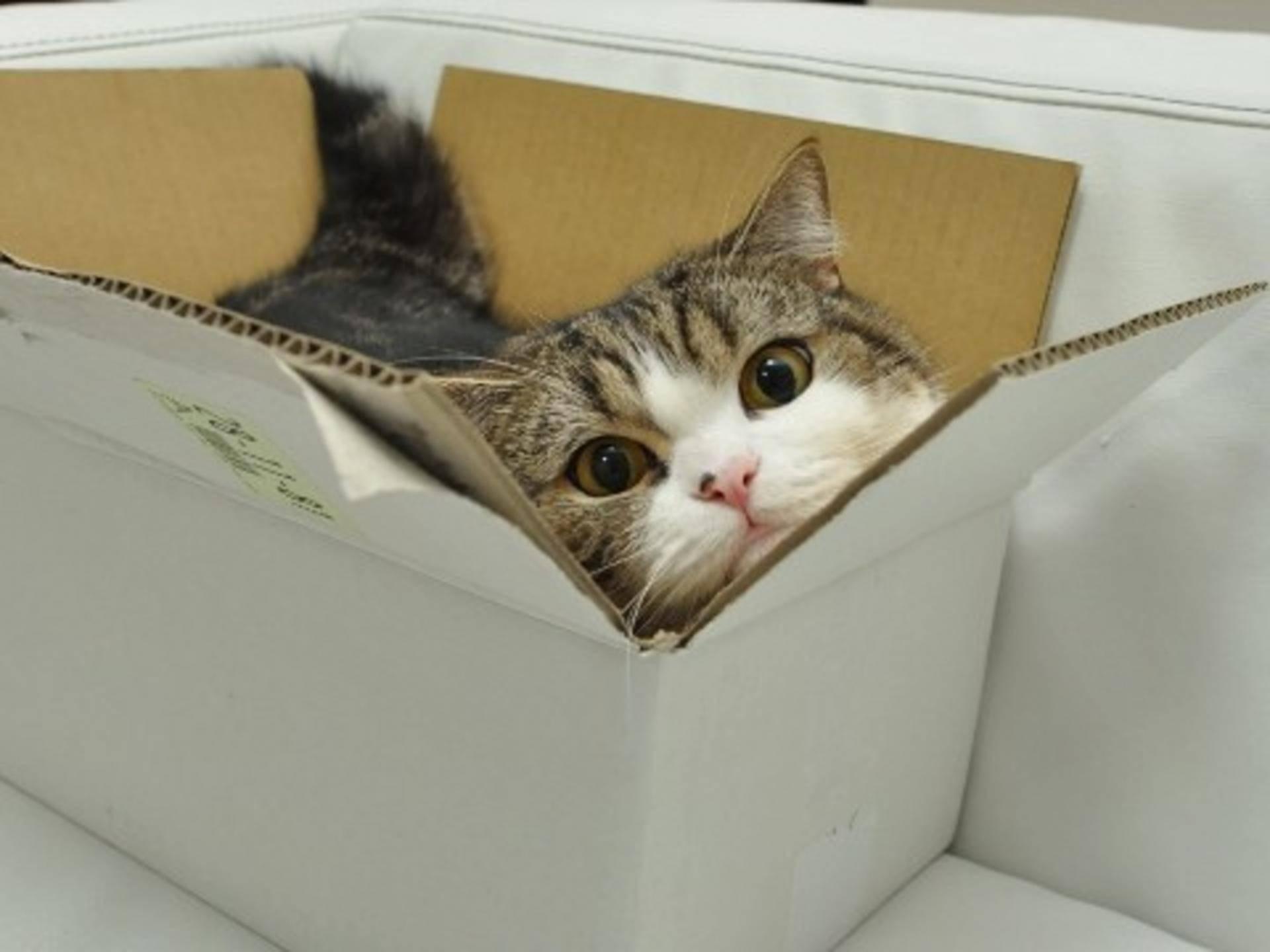 Почему кошки и коты любят коробки: в чем это проявляется, каковы причины, вред и польза такой привычки, фото, видео