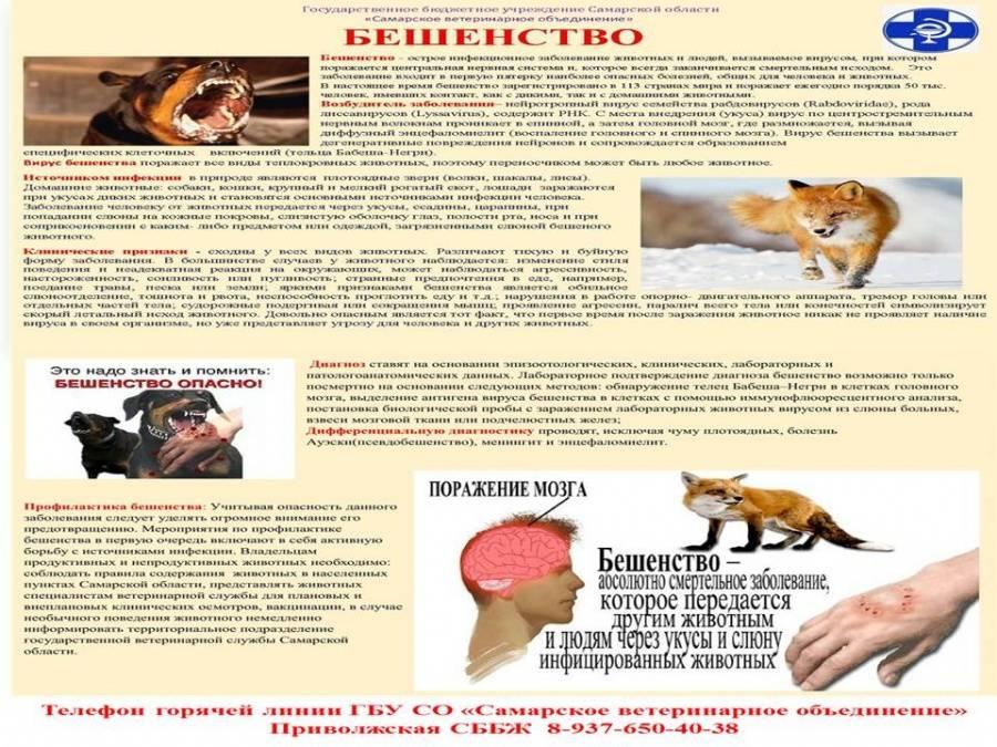 Как кошки могут заразиться бешенством: основные пути инфицирования
