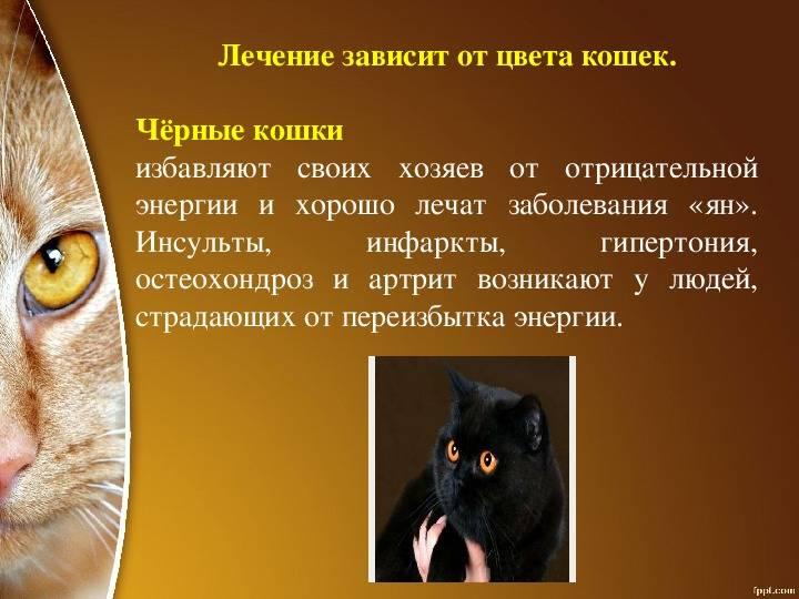 Как кошки лечат людей - миф или правда - kotiko.ru