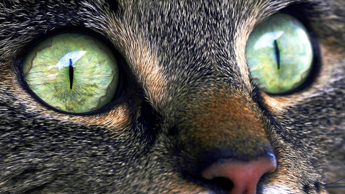 Почему нельзя смотреть в глаза кошке?
