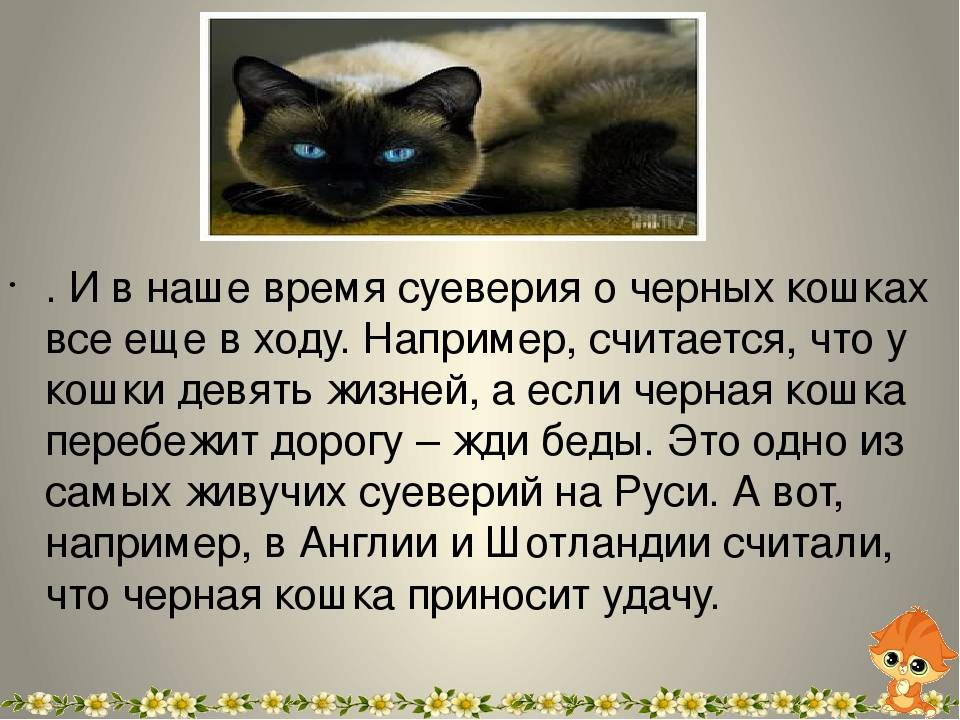 Приметы и поверья о кошке в доме