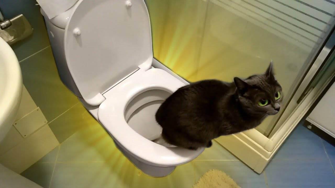 Как приучить котенка к когтеточке. краткая инструкция из 7 способов
