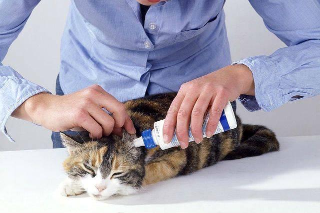 У кошки болят уши как лечить - муркин дом