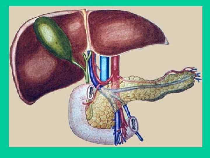 Синдром холестаза: симптомы у взрослых и детей, признаки на узи, лечение и диета
