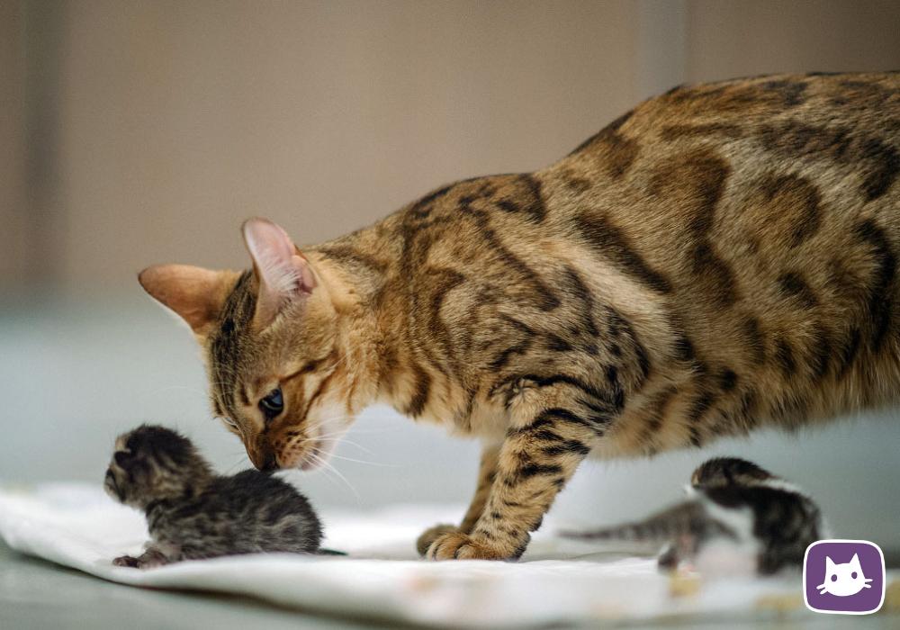 Кошка и новорождённые. как всё должно быть?