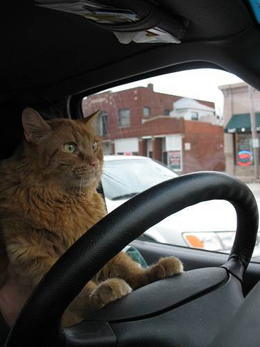 Как правильно перевезти кота в машине: правила и советы