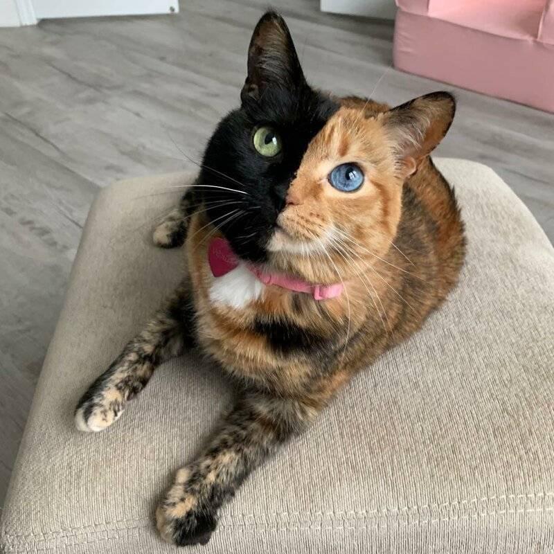 30 самых удивительных пород кошек