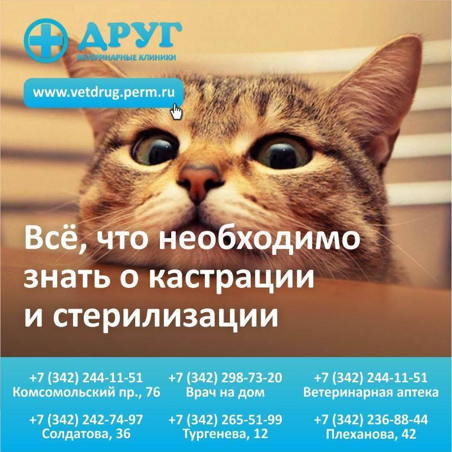 Стерилизация и кастрация кошек