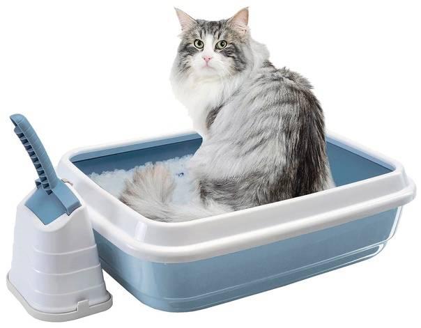 Как приучить котенка или кошку к лотку и унитазу