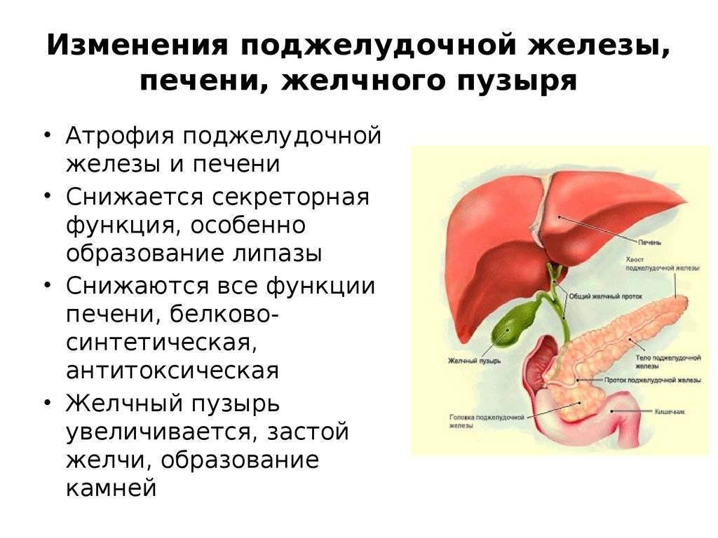 Холестаз у кошек симптомы и лечение