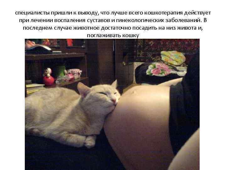 Если кот спит на животе у беременной