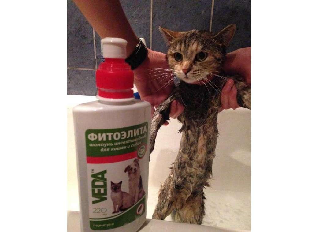 Как вывести блох у кошки и котенка: эффективные средства от паразитов, правила их использования