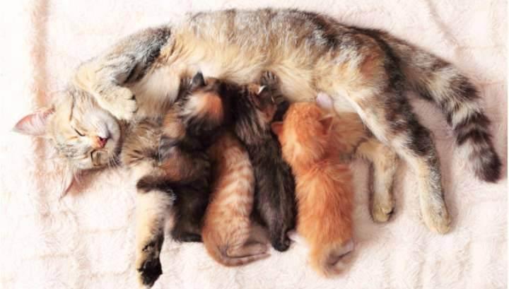 Как принять роды у кошки правильно