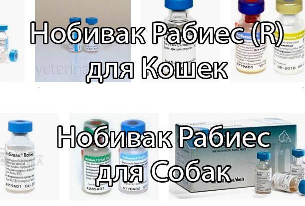 Нобивак рабиес (r) для кошек │ нобивак рабиес для собак