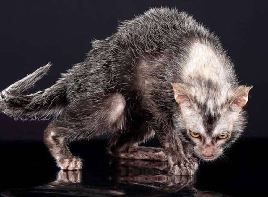 Страшный кот: самые необычные породы