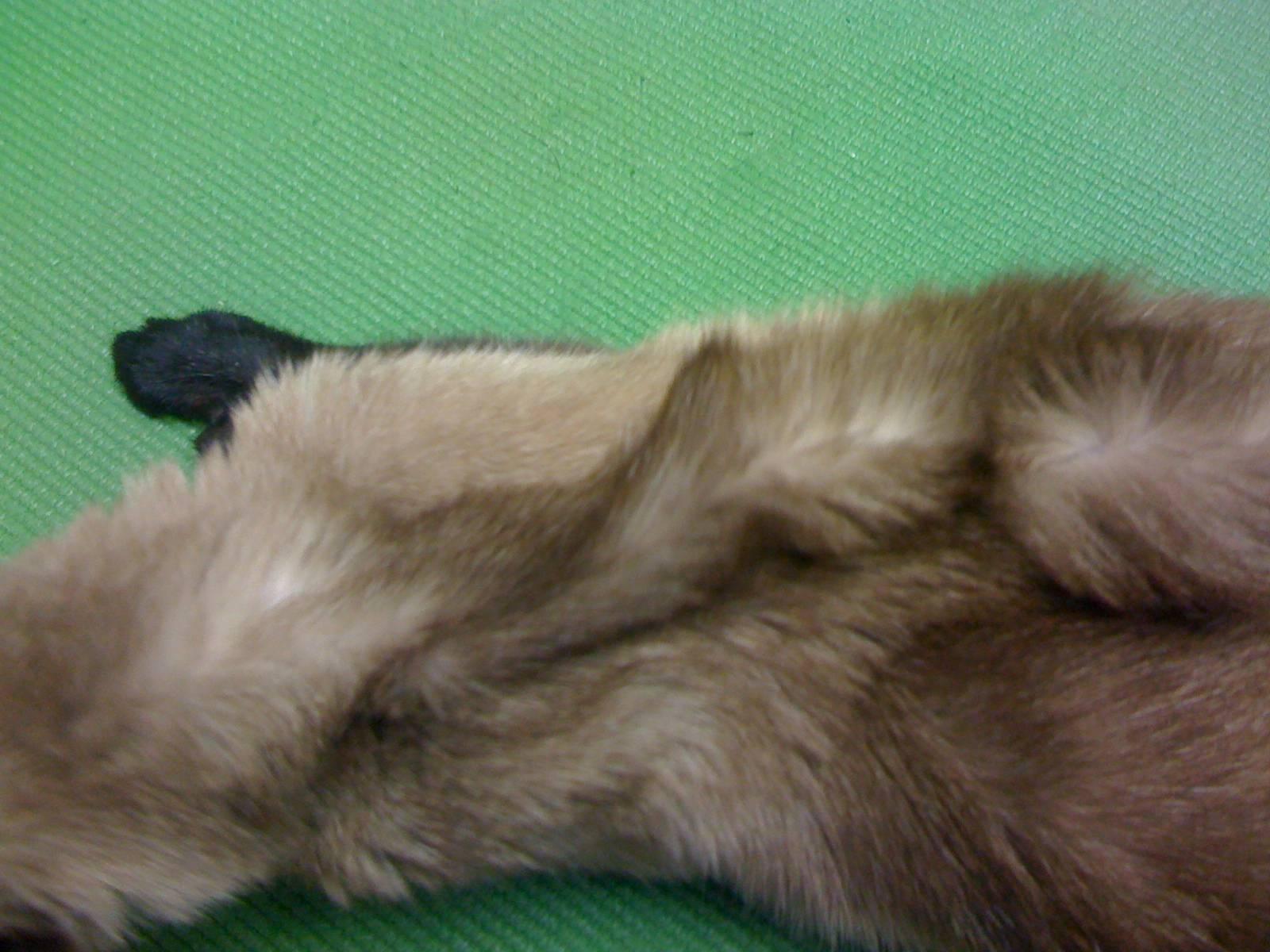 Что делать, если у кошки обезвоживание?