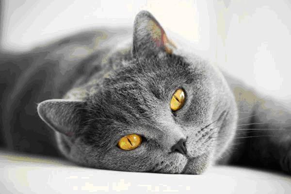 Как откормить кота без риска для здоровья питомца