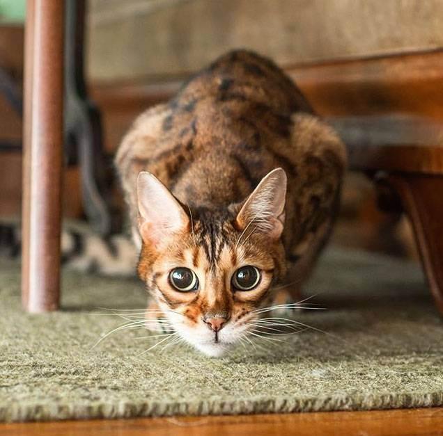 Полезно ли кошке гулять?