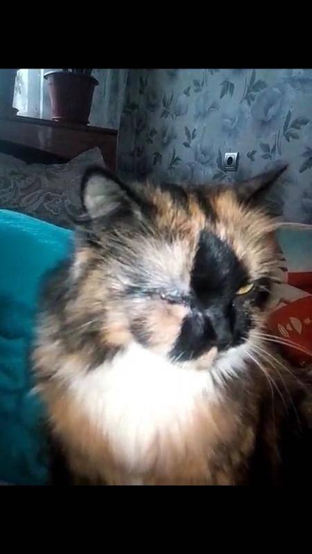 Что делать если у кота опухла щека