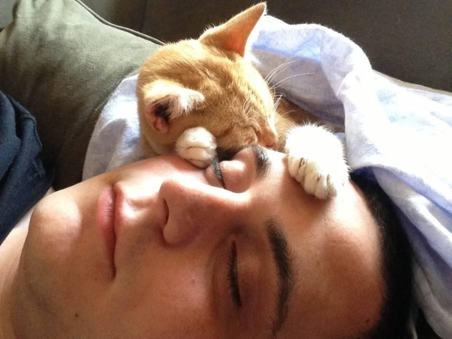 Почему кошка на больное место человека ложится.
