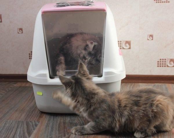Лоток с решеткой для кошек (12 фото): как правильно пользоваться кошачьим туалетом? как наполнять большой лоток? как приучить к нему кота?