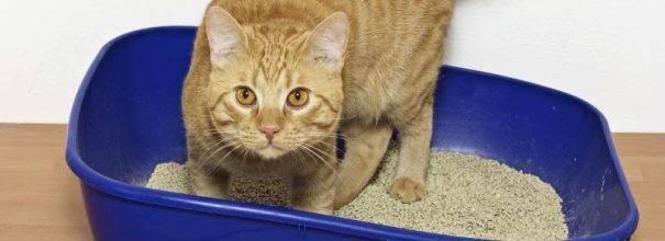 Обзор лотков для кошек: виды кошачьих туалетов, как выбрать и использовать