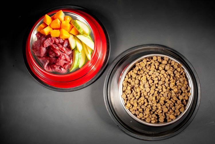 Чем лучше кормить котенка: натуралкой или сухим кормом?