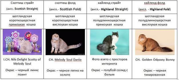 Генетика белого окраса кошек