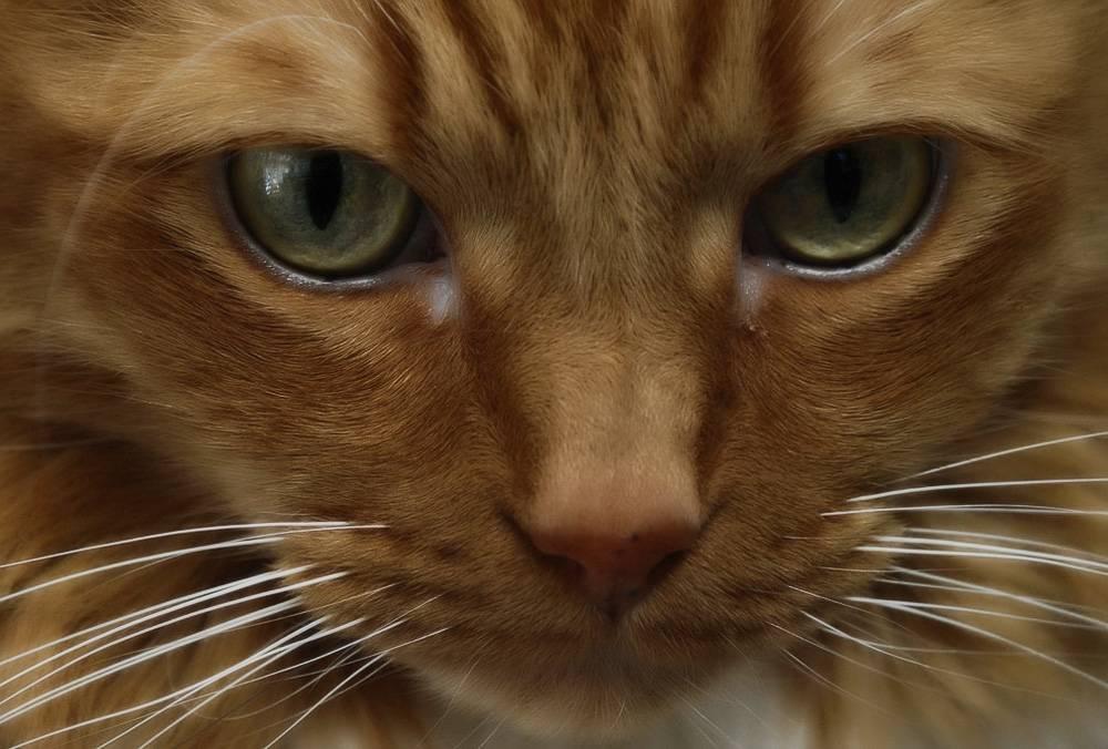 Какой должен быть нос у здоровой кошки