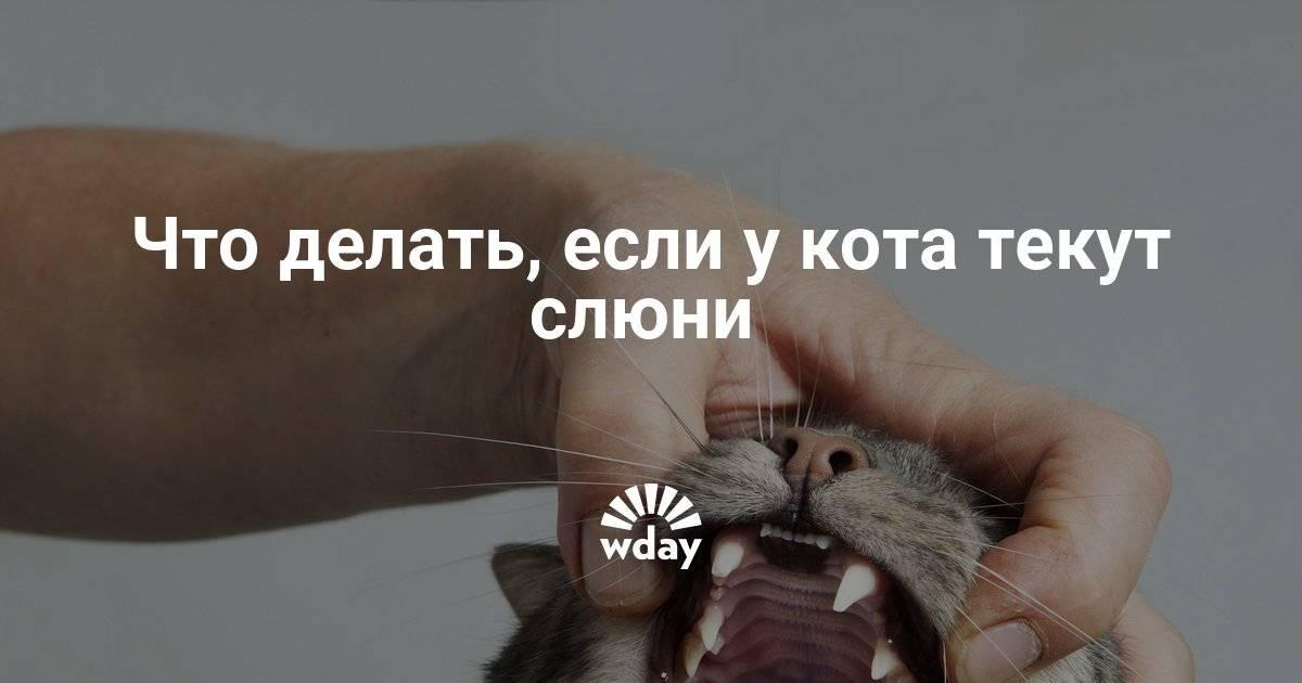Почему у кота текут слюни, как капли прозрачной воды