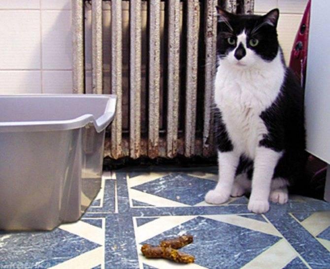 Когда коты начинают метить территорию: возраст котов, что делать, как отучить?