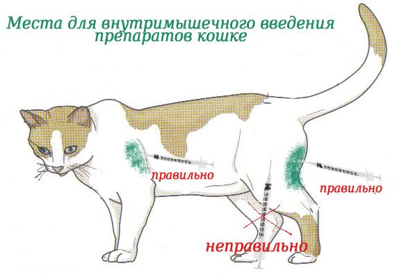 Как правильно сделать укол кошке в домашних условиях?