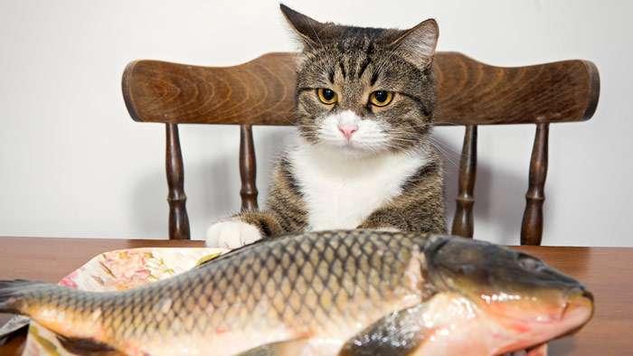 8 причин, почему кошек нельзя кормить рыбой