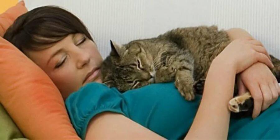 Болезнь любви к кошкам как называется