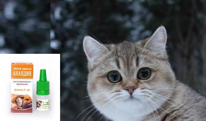 Почему кот чихает и что при этом делать?