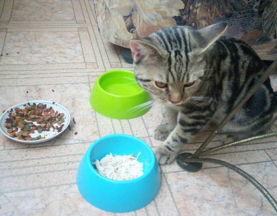Кошка не ест и не пьет долгое время: основные причины отказа от воды и еды