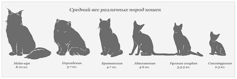 Вес котёнка по месяцам: зачем следить за показателем