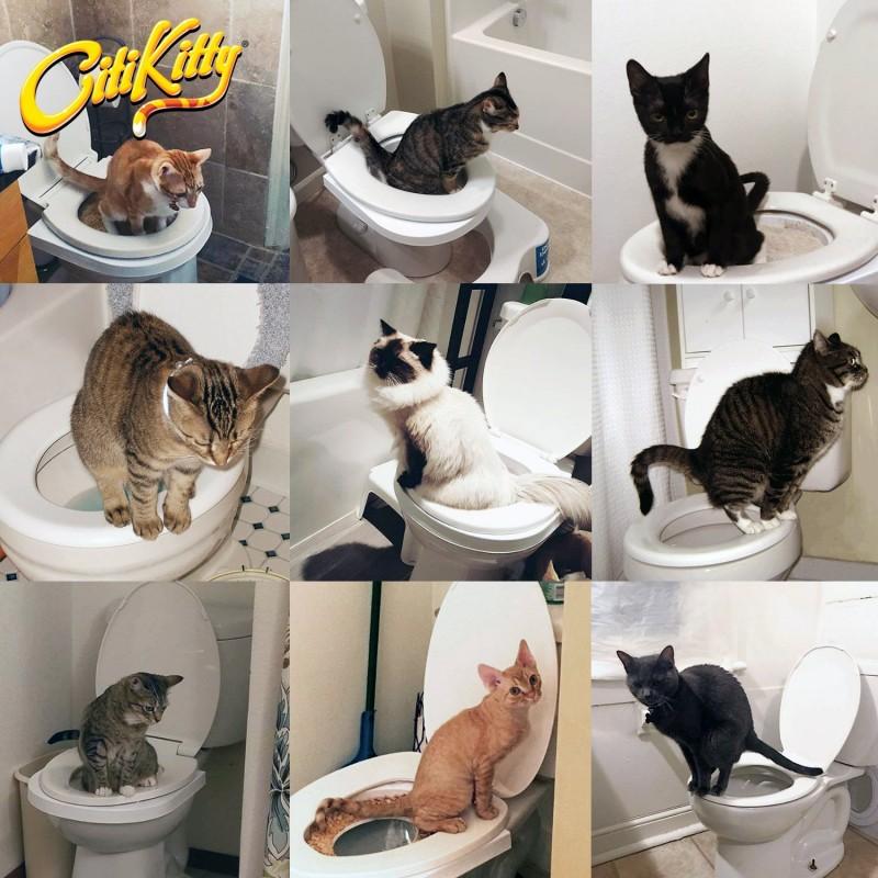 Как приучить кота к унитазу инструкция