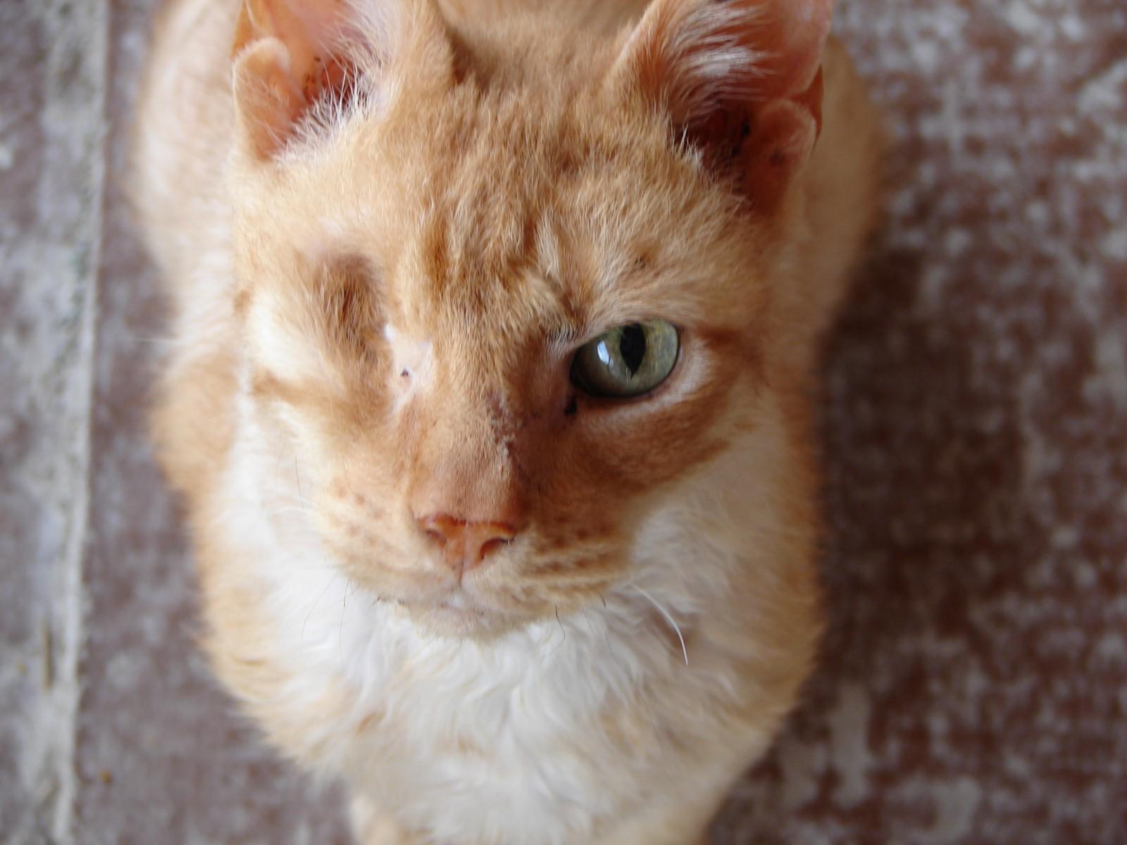 Кошка часто моргает глазами
