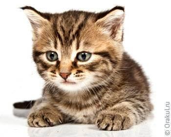 «биологические часы» и сон кошек