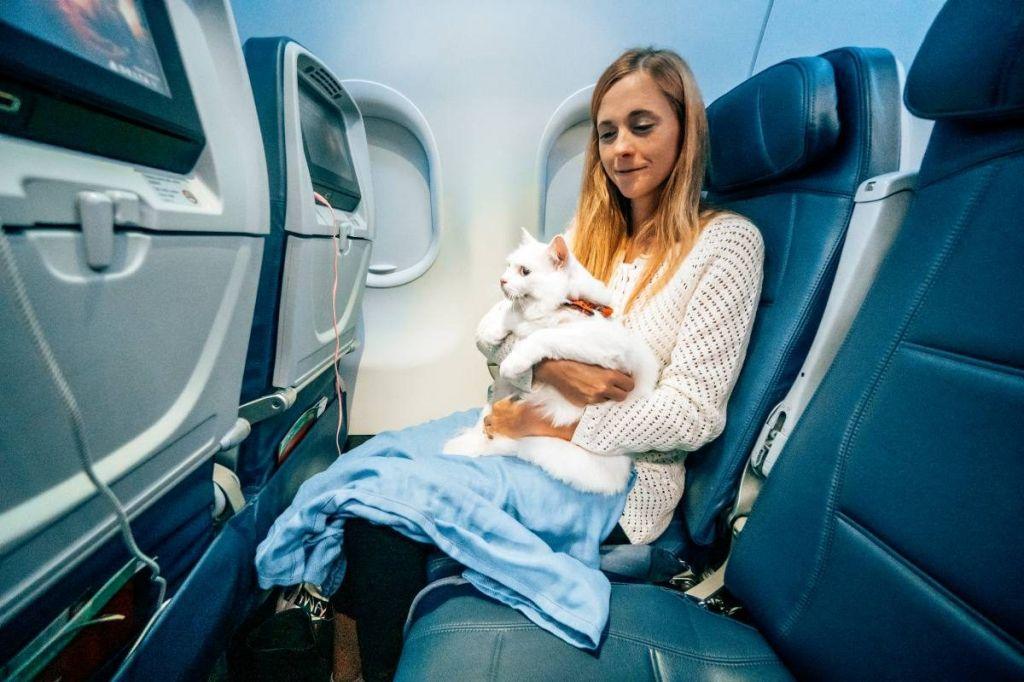 Перевозка кошек в самолете: основные правила, документы, подготовка