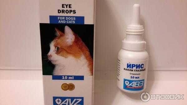 У кошки воспалился глаз — чем лечить и что делать, капли при воспалении