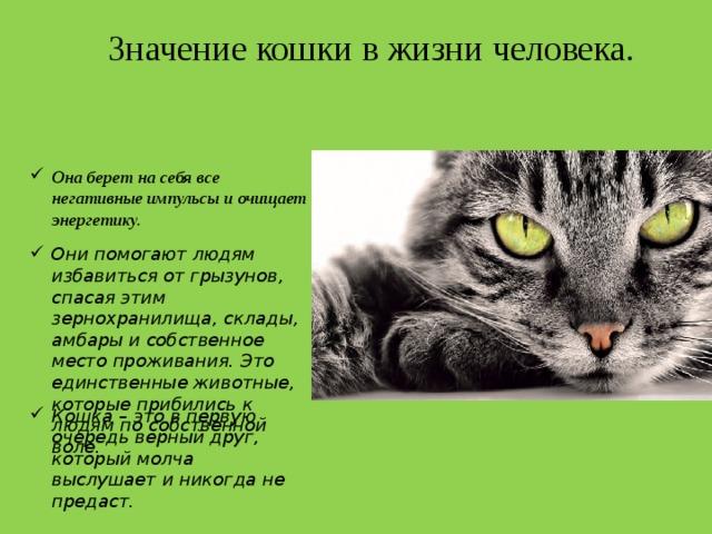 Какая польза от кошек? польза кошек какая польза от котов людям.