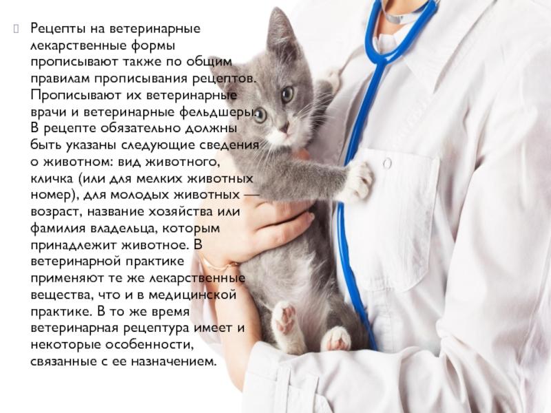Можно ли кормить кошку перед стерилизацией: мнение ветеринаров