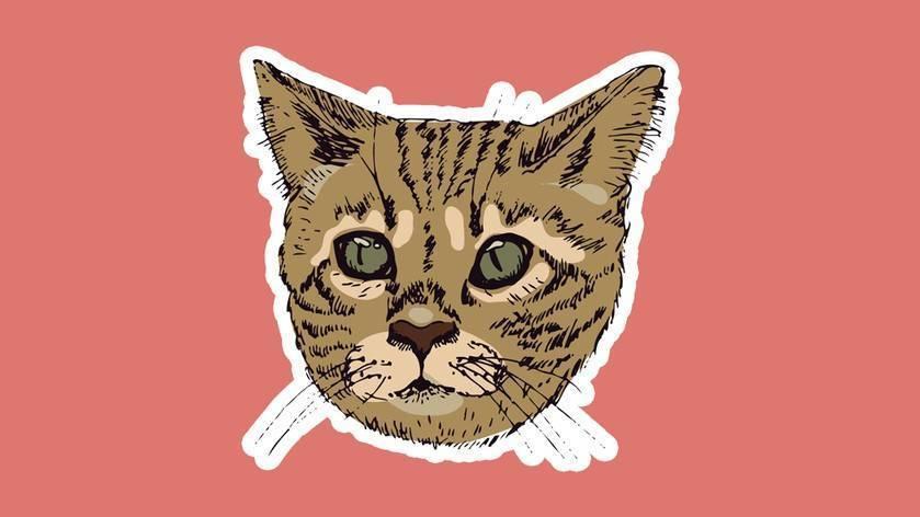 Боль у кошек   испытывают ли кошки боль?