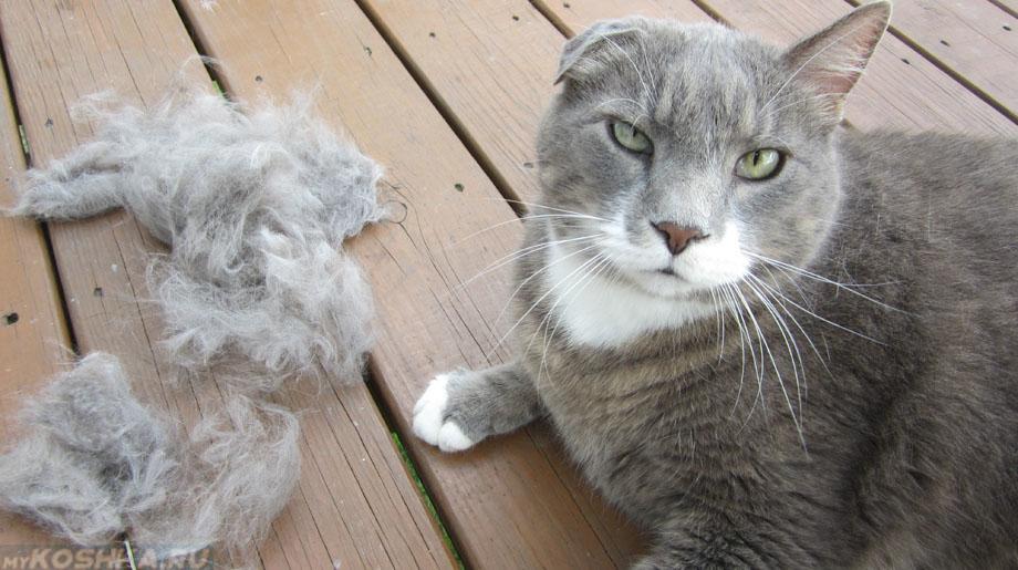 Облысение у кошек: причины, лечение, меры профилактики и симптомы болезней